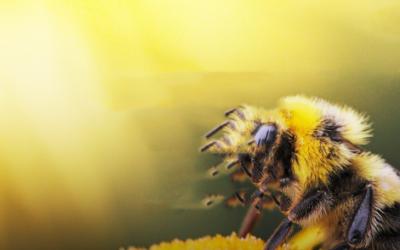 Ismered … Adél a Méh ?