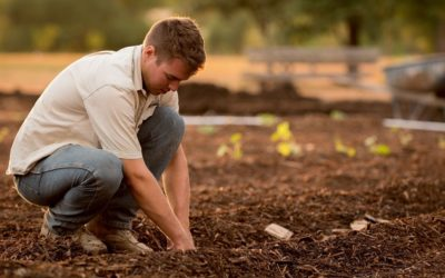 ONE HEALTH (egy egészség): a talajétól az emberek egészségig egyetlen lépésben